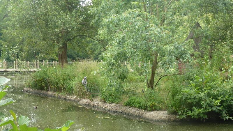 Un beau coin de verdure au zoo de Mulhouse