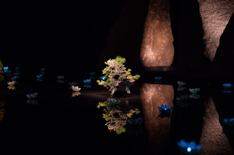 Des bonsaïs et de l'eau