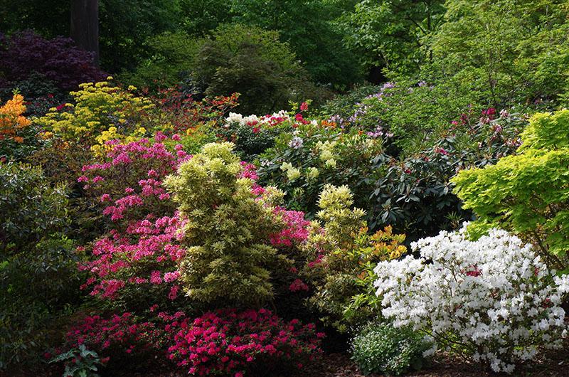 Rhododendrons | Parc zoologique et botanique | Mulhouse Alsace