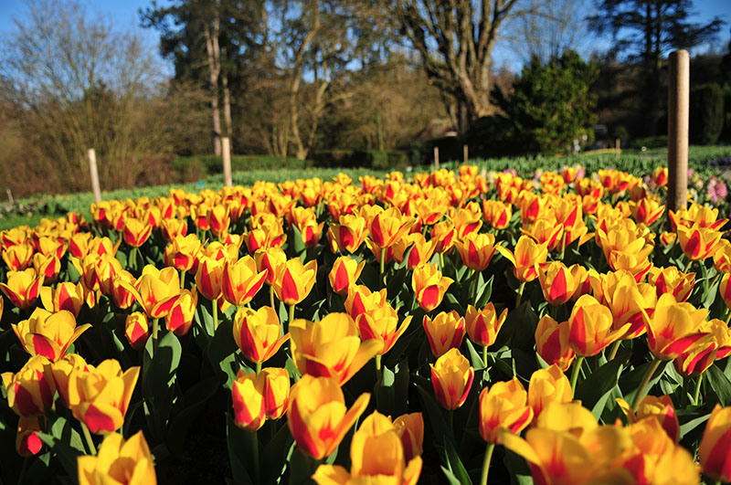 Tulipes | Parc zoologique et botanique | Mulhouse Alsace