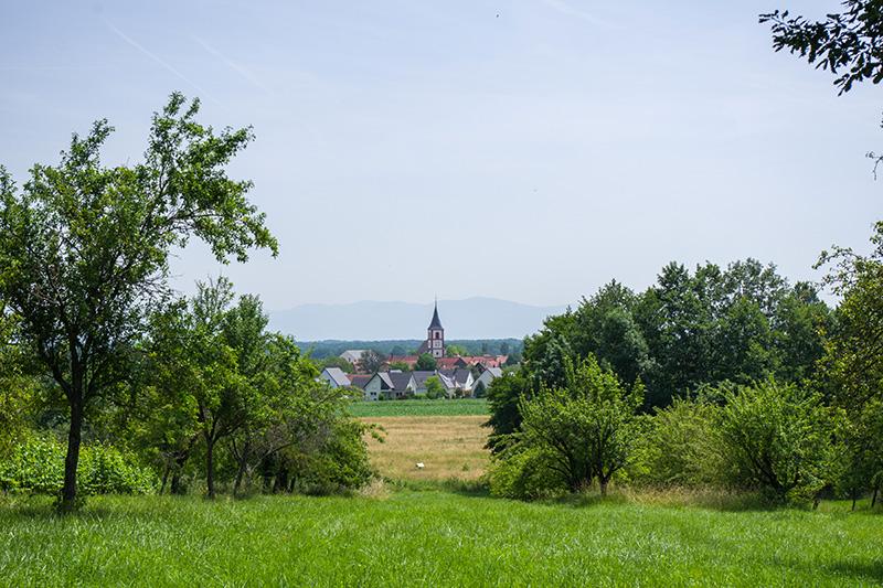 Coup de coeur #mulhousexperience | Rando à Berrwiller | Mulhouse Alsace