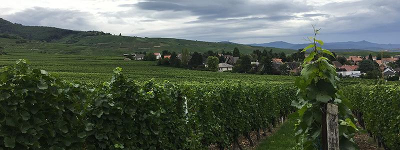 Coup de coeur #mulhousexperience | Segway dans les vignes | Mulhouse Alsace
